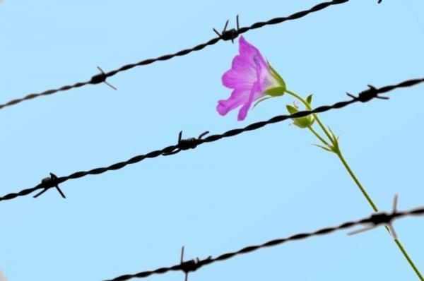 خبرنگاران 2 خیر یزدی 400 میلیون ریال برای آزادی زندانیان اهدا کردند