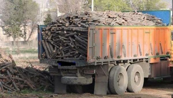 قانون مبارزه با قاچاق چوب بازدارنده نیست
